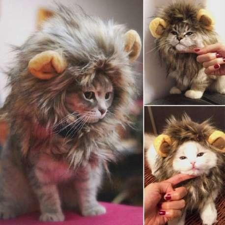 Costume de lion pour chat et petit chien déguisement