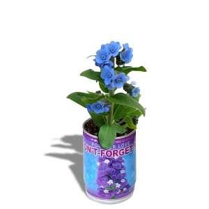 Fleurs bleues en canette message don't forget me