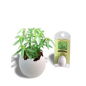 Plante Aturi dansante décoratif plante qui dance dans un pot œuf