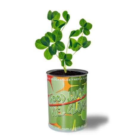 Plant de trèfles à quatre feuilles porte bonheure dans sa canette