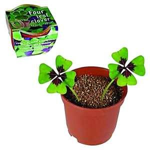 Trèfle à 4 feuilles à planter avec 2 bulbes en pot