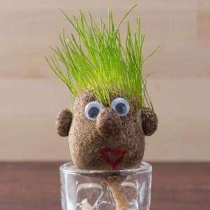 Tête à cheveux d'herbe à faire pousser